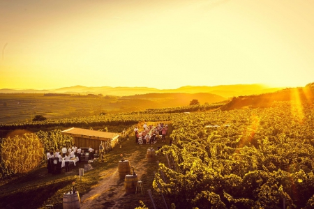 Weinweg Langenlois - Kostbares Kamptal